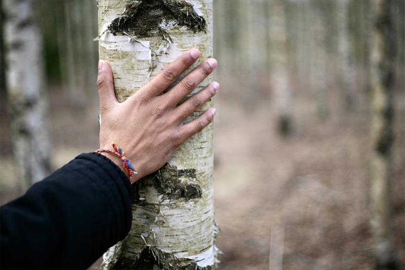 Käsi koivulla metsä