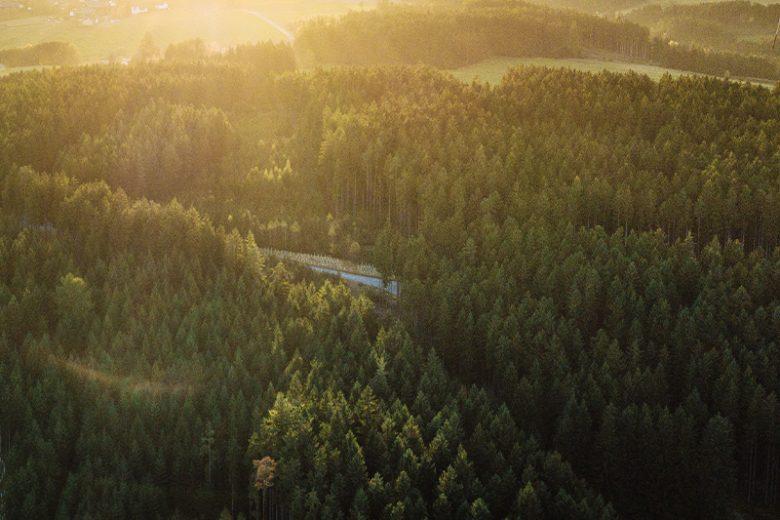 Metsää auringonlaskussa